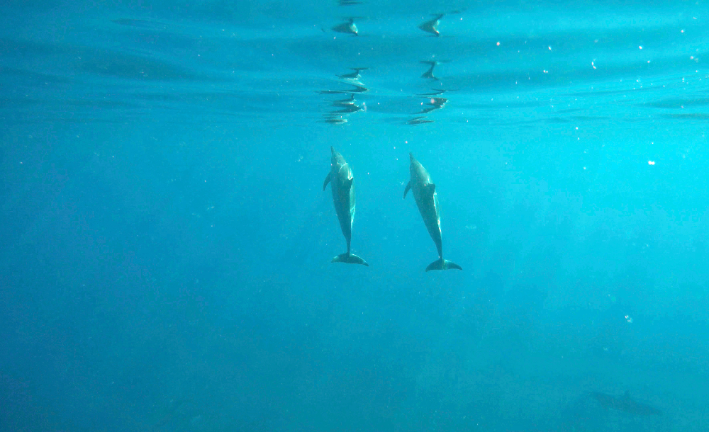 Morning swim with dolphins