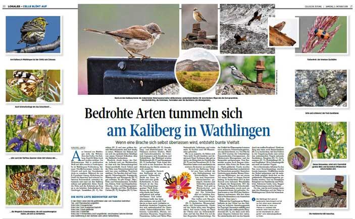 Quelle: Cellesche Zeitung, 05.10.2019