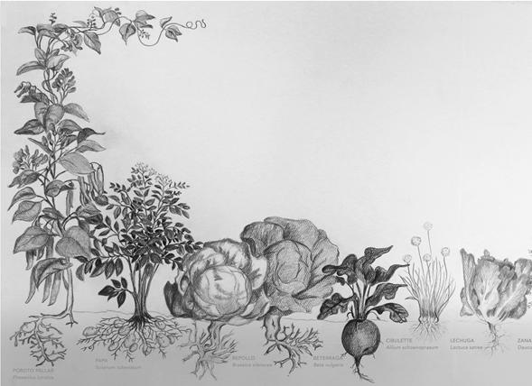 La Huerta familiar de la cuenca del Lago LLanquihue