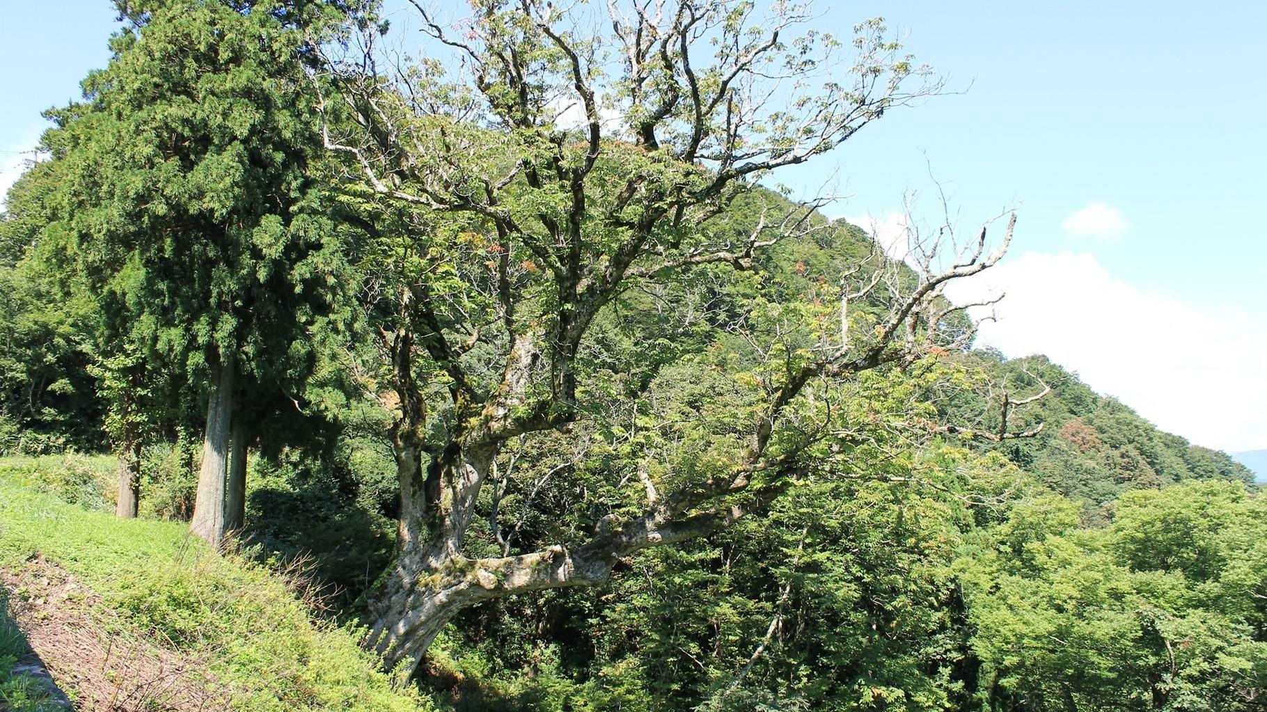 峠名に由来する栃ノ木が現存する。