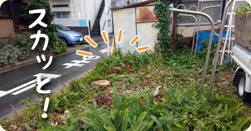 4.撤去完了|キンモクセイ(金木犀)の伐採・撤去ドキュメント【門西造園|浜松市】