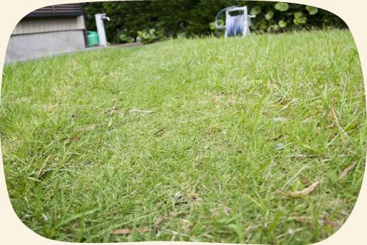 青々とした綺麗キレイな芝生のお庭【門西造園|浜松市】