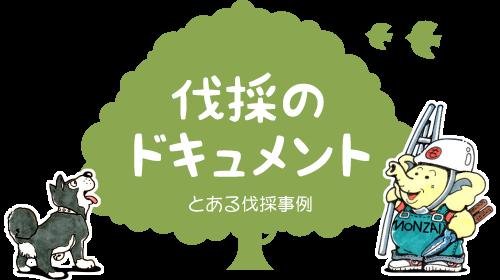 キンモクセイ(金木犀)の伐採・撤去ドキュメント【門西造園|浜松市】