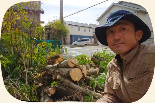 チェンソーで伐採撤去された金木犀キンモクセイ【門西造園|浜松市】