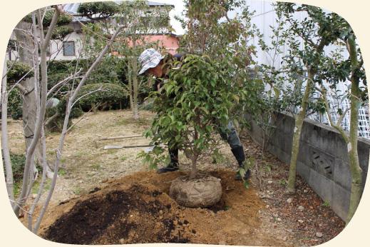 庭木の植込み・植栽・植樹|浜松・湖西・磐田・豊橋