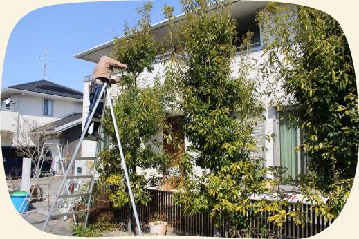 一般住宅のお庭の植木の剪定・お手入れ【門西造園】浜松・湖西・磐田・豊橋