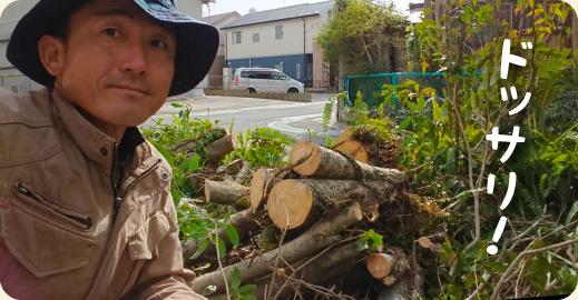 3.伐採完了|キンモクセイ(金木犀)の伐採・撤去ドキュメント【門西造園|浜松市】