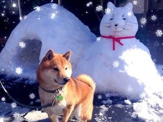 たくさん雪がふりました。