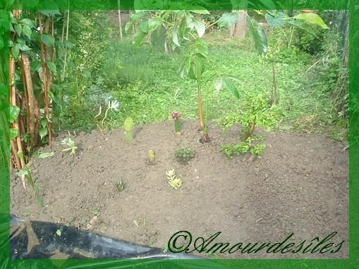 Un plus grand plan des petits cactus et bonzais en dessous de l'avocatier...