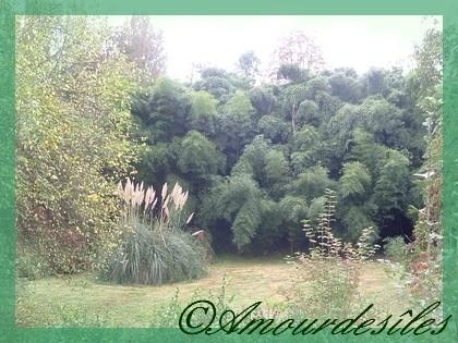 De quoi s'éclater en se promenant dans dette belle forêt de bambous et de pampas...