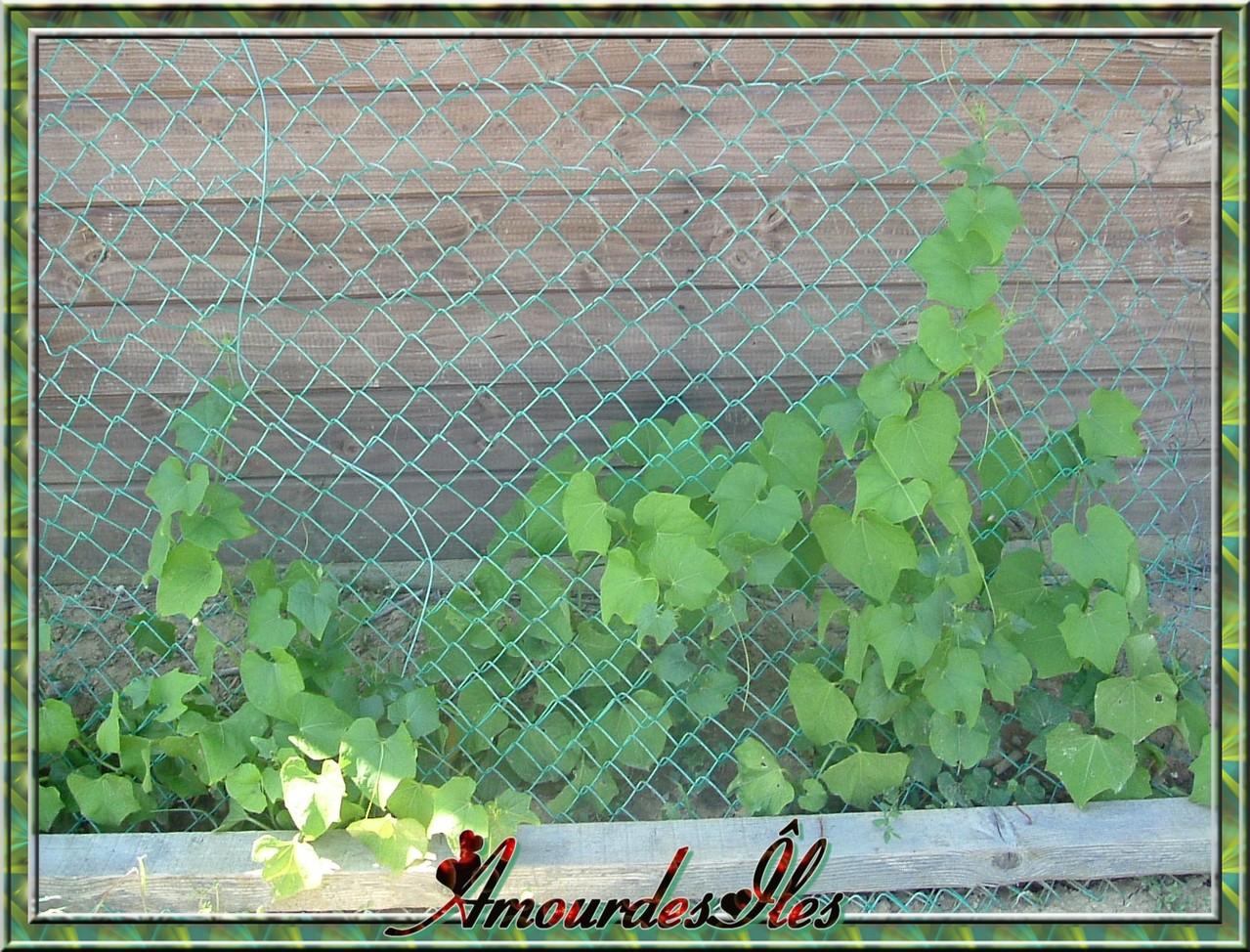 Plantation et jardin for Jardin et plantation