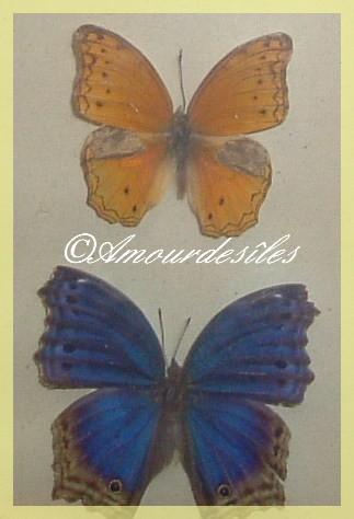 Magnifiques et superbes Papillons ...