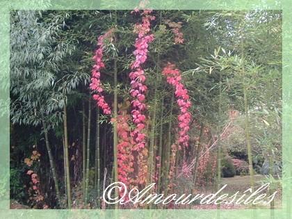 Très belle fôret de Bambous...