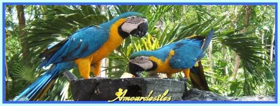 Et ceux-là, magnifiques plumages bleux!