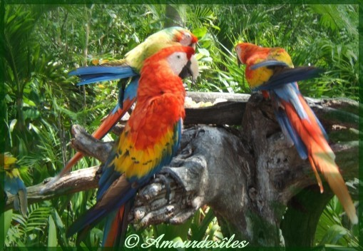 Photographies de mon ami Kiné ramenées du Nouvea Mexique, très beaux perroquets écarlates!