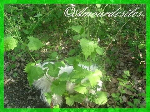 Ty Lou, lors de nos longues marches à pieds dans la Nature..