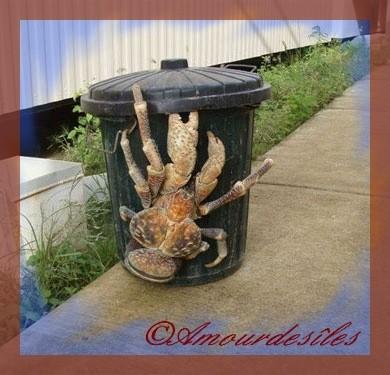 Terrible Crabe