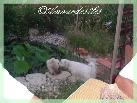 Ty Lou surveillant Mimosa qui a été malade, il est en convalescence ...