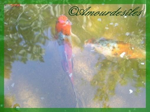 Et, les poissons heureux dans leur univers..