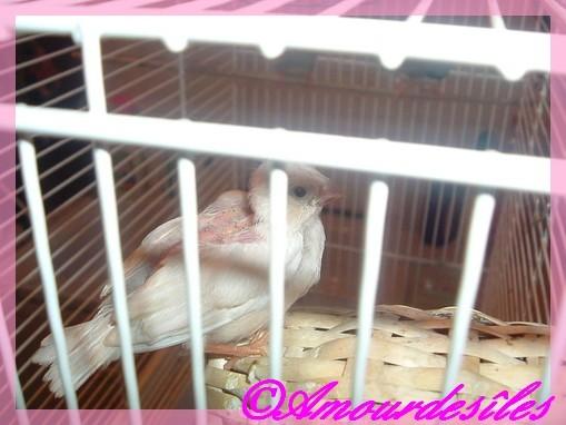 Bébé Mandarin qui est né tout blanc...ce printemps 2009!