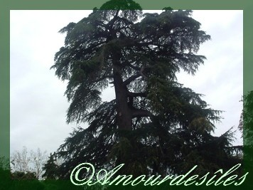 Tu es  plus immense à mes yeux et dans mon coeur que cet arbre ....pourtant magique, vu son âge!!!