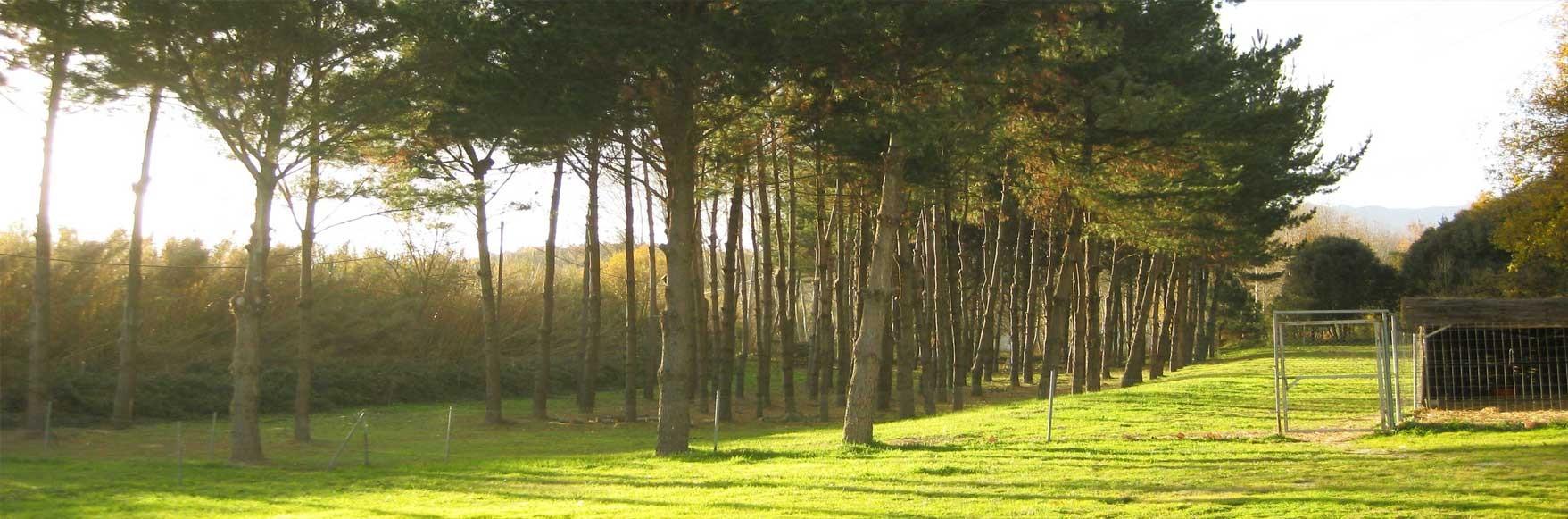 El bosque dentro de la finca