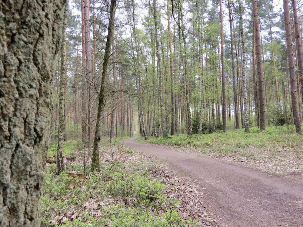Ganz allein im Wald unterwegs - keine Menschenseele