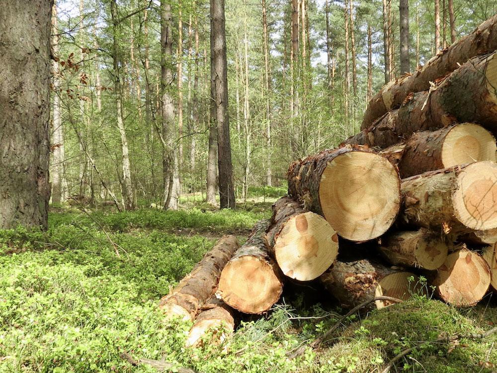 Duftendes Holz entdecken