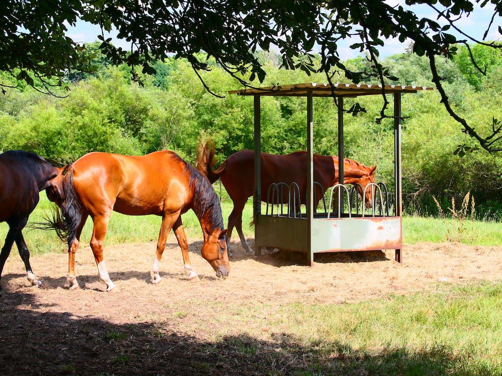 Pferde am Ortseingang