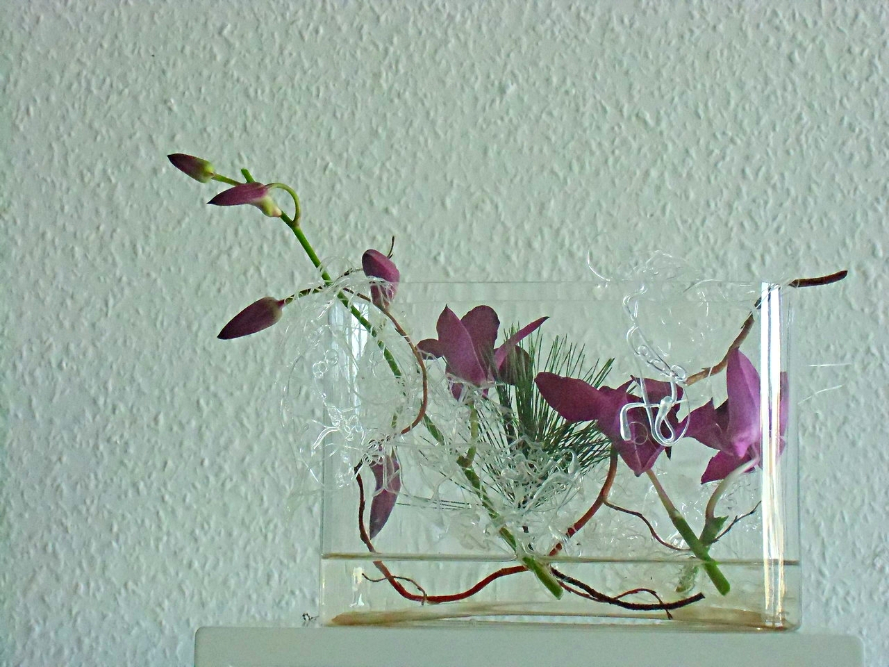 Dendrobien in Glas