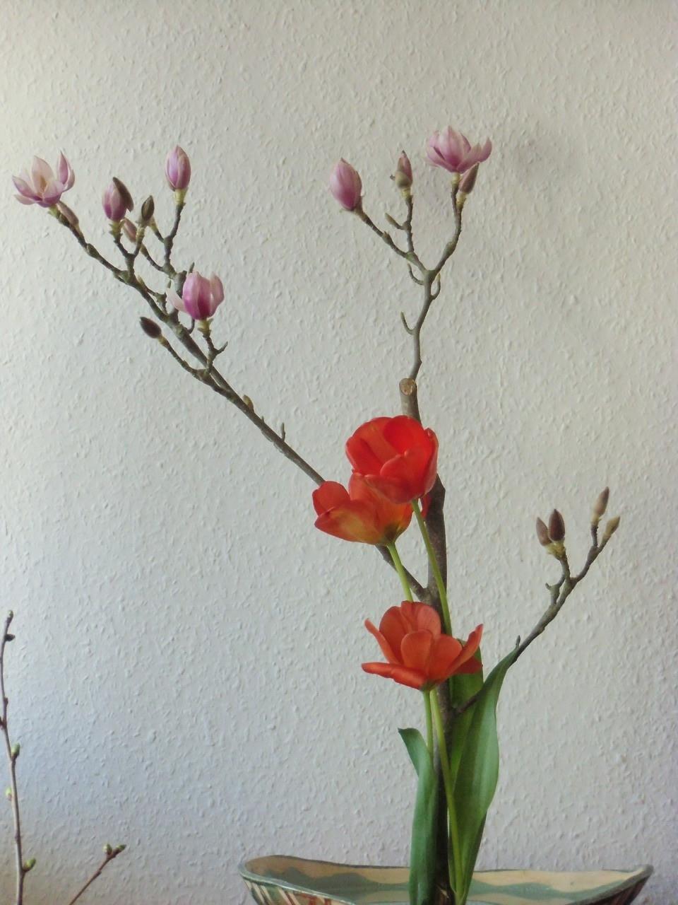 Magnolienzweige mit französischen Tulpen