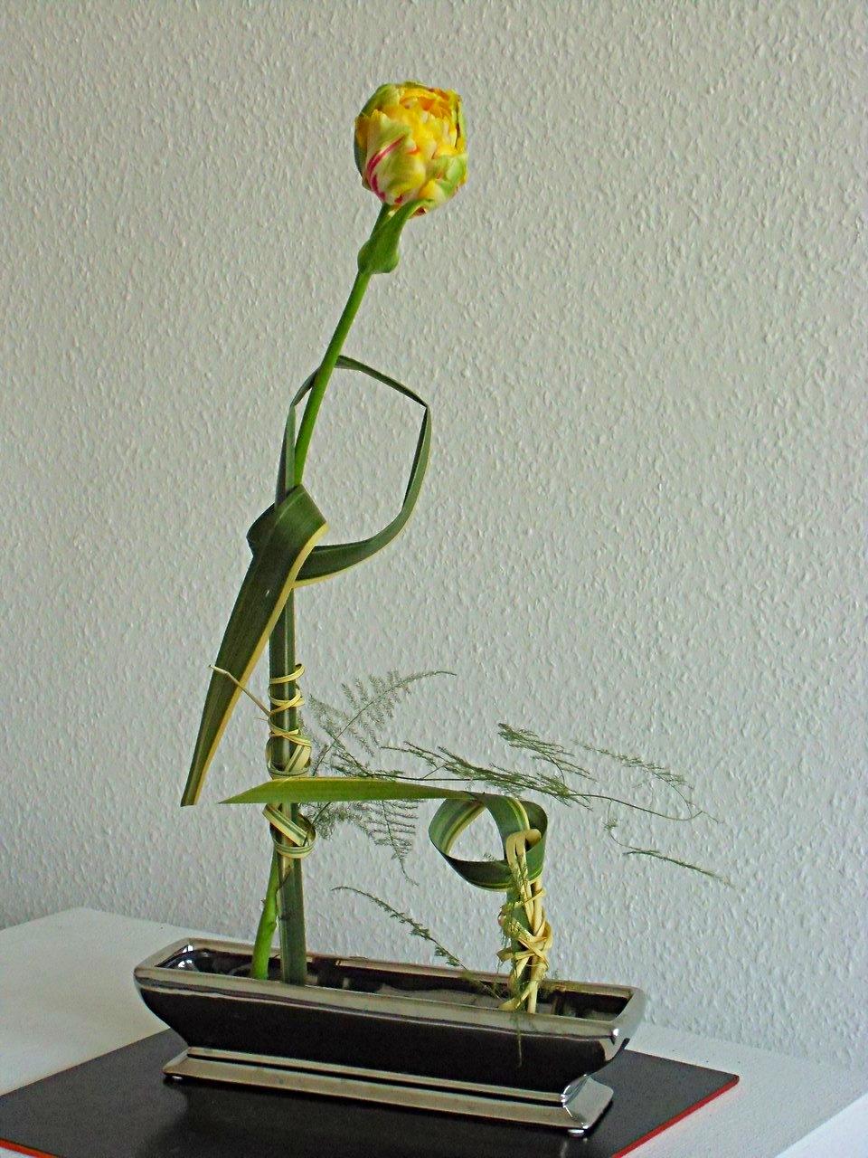 Französische Tulpe im Formiumblatt