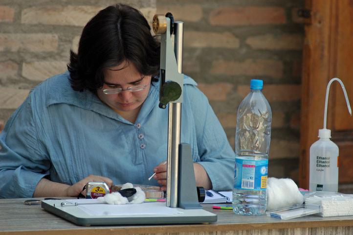 Céline Ollagnier en train d'examiner un échantillon de céramique glaçurée timouride du Musée amir Temur de Shahrisabz (photo : M.Schvoerer, 2008)