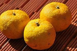 柚子マーマレードの原料となる柚子