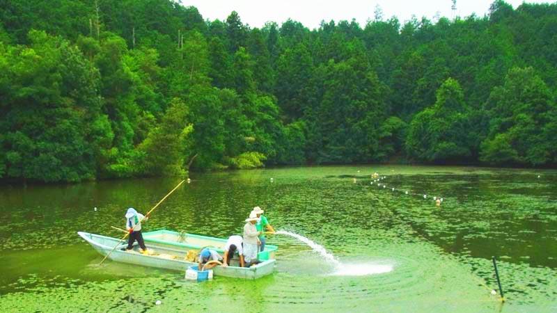 滋賀県養殖池 水草ヒシ除去: 水生植物発芽防止剤 ザ・フィッシュガード