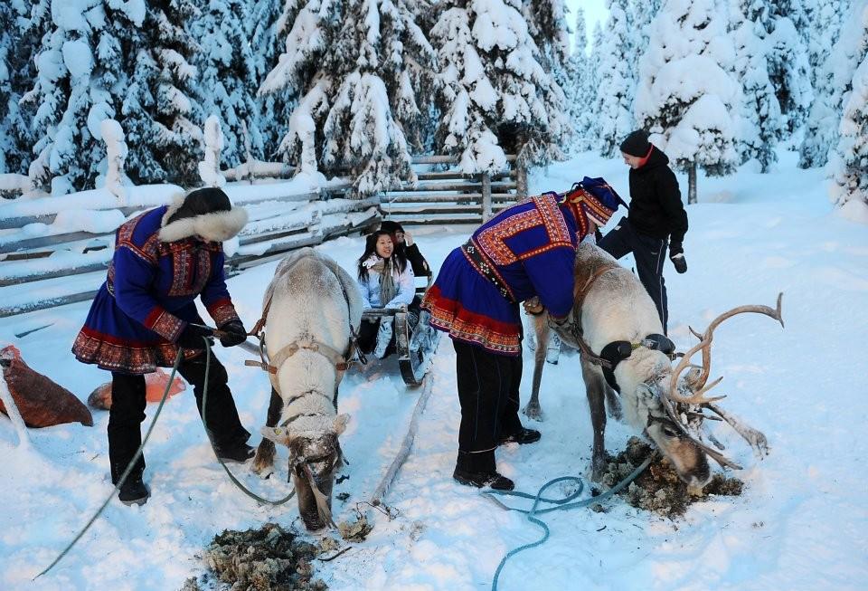 ...feeding the reindeers