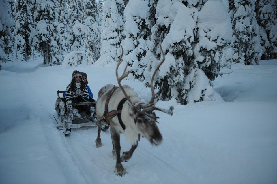 ...reindeer race
