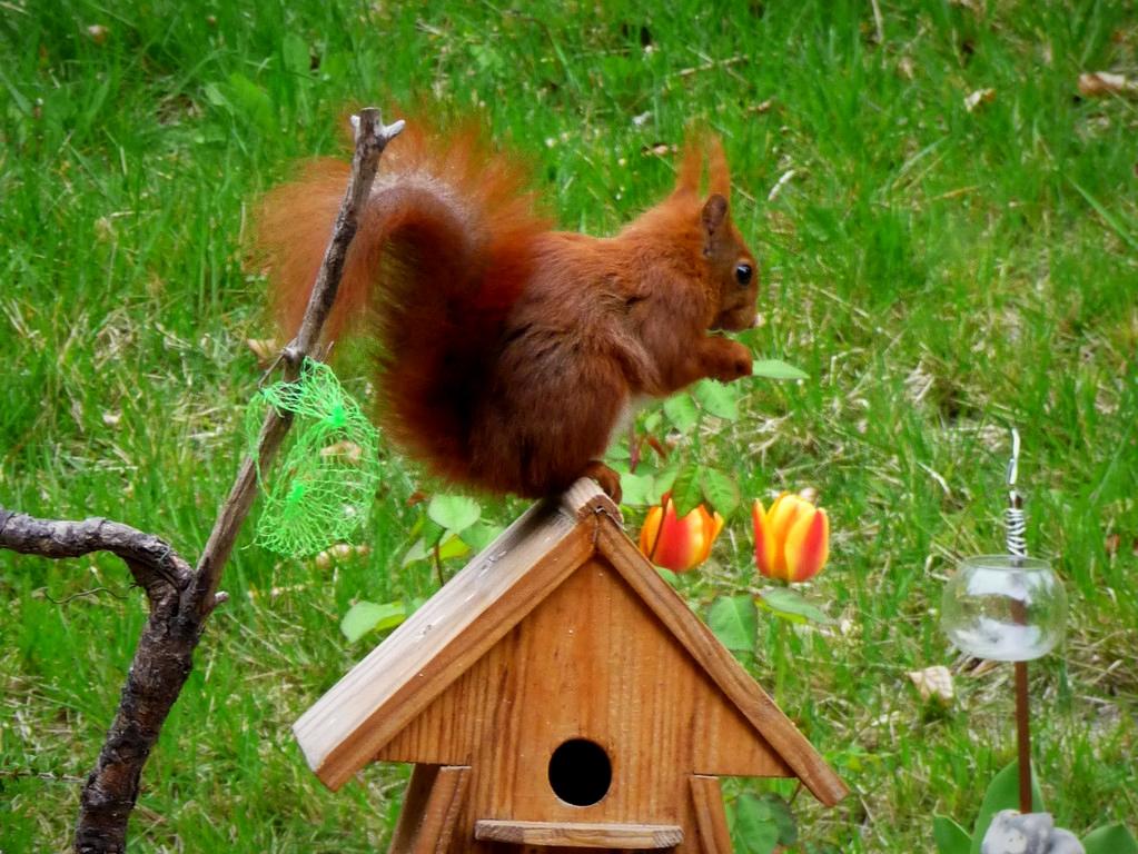 et voici les écureuils