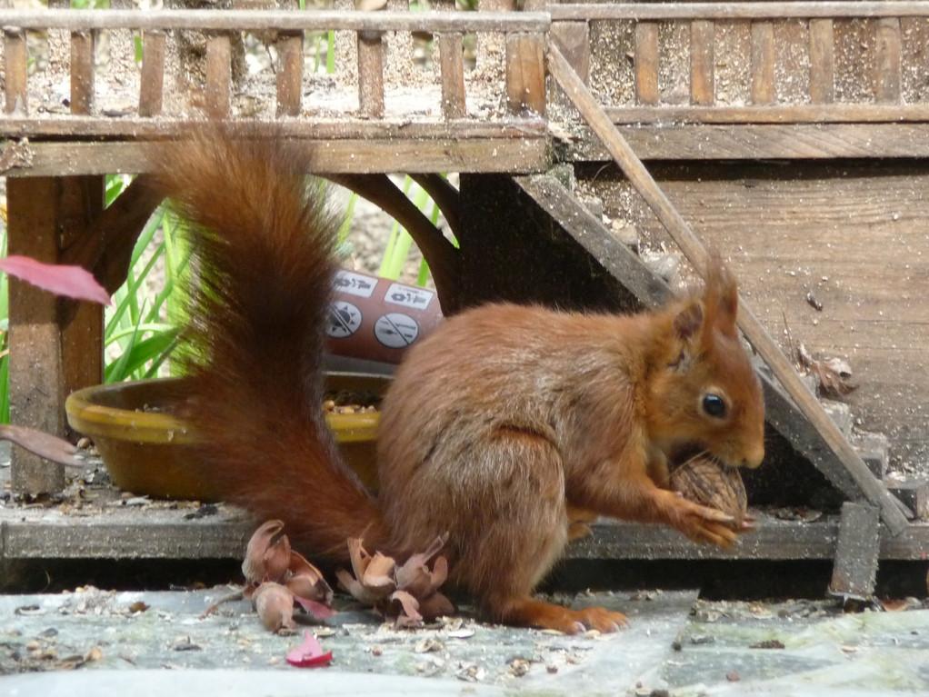 """Elles sont très bonnes les noix de """"La Sapinière"""" !..."""