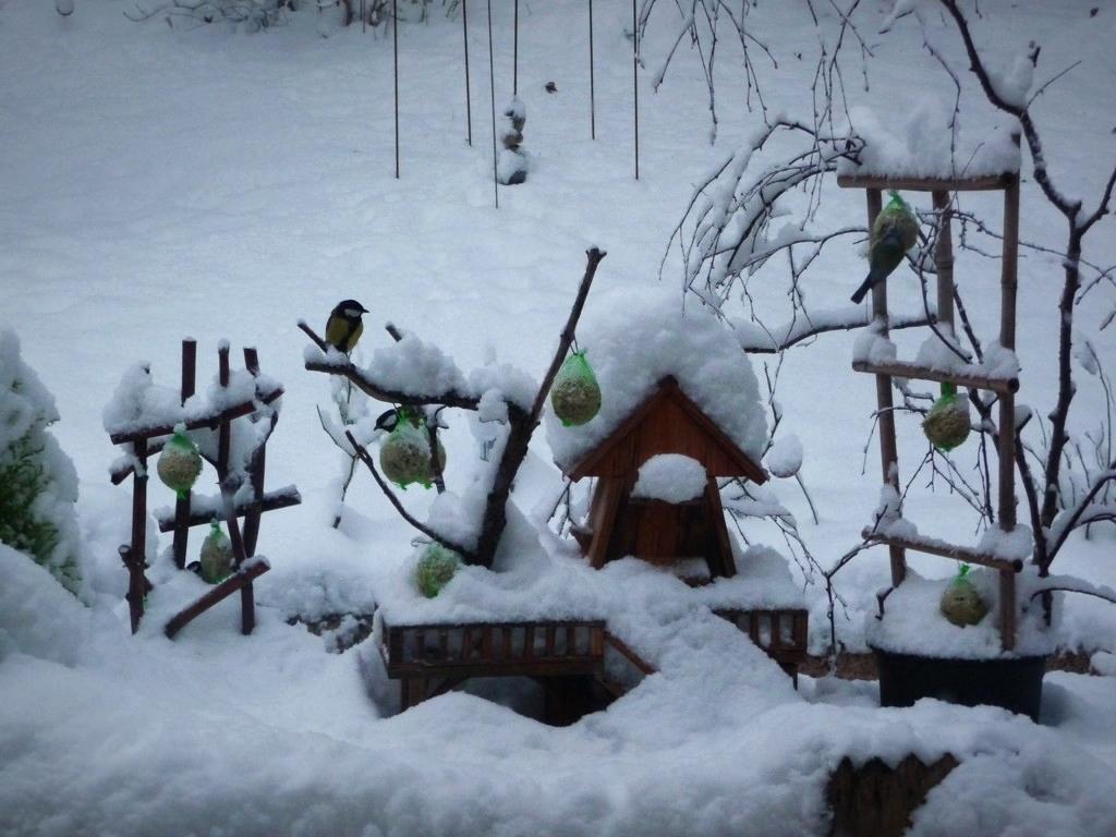 la volière sous la neige