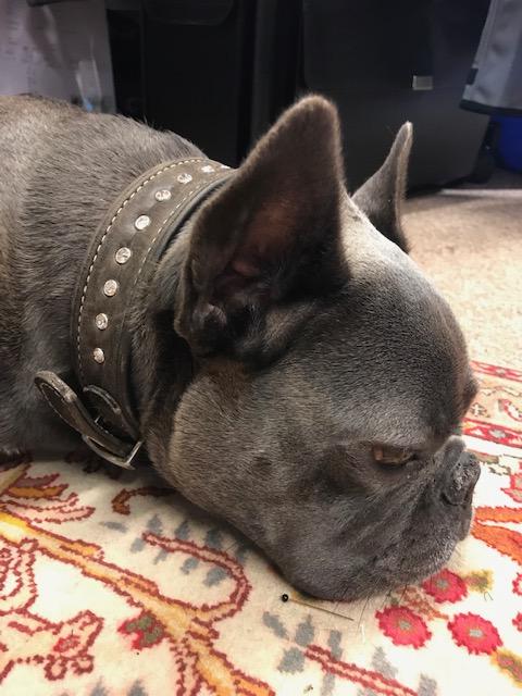 Hunde-Halsband gepimt mit Swarovski-Steinen / 22.09.2019