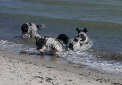 Wir waren im Wasser, ...