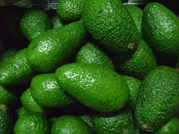 aguacate hass, aguacate