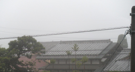4/15  朝霧