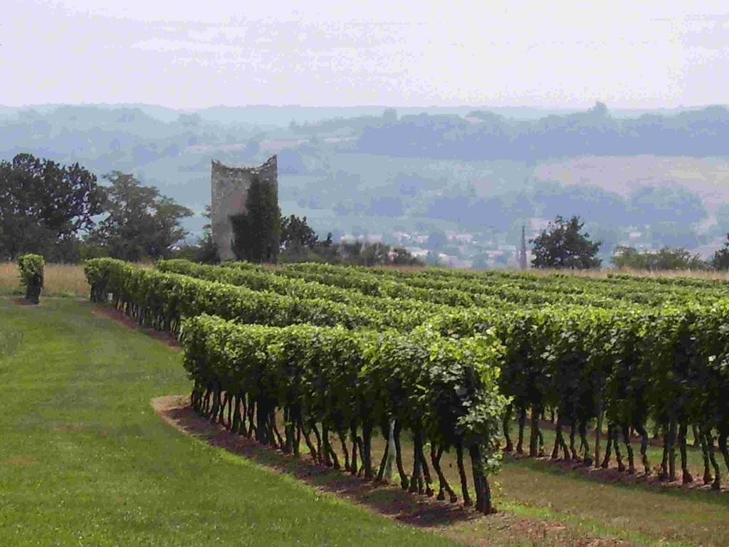 Wandeling in de wijngaarden en op de weg naar Saint Jacques de Compostella