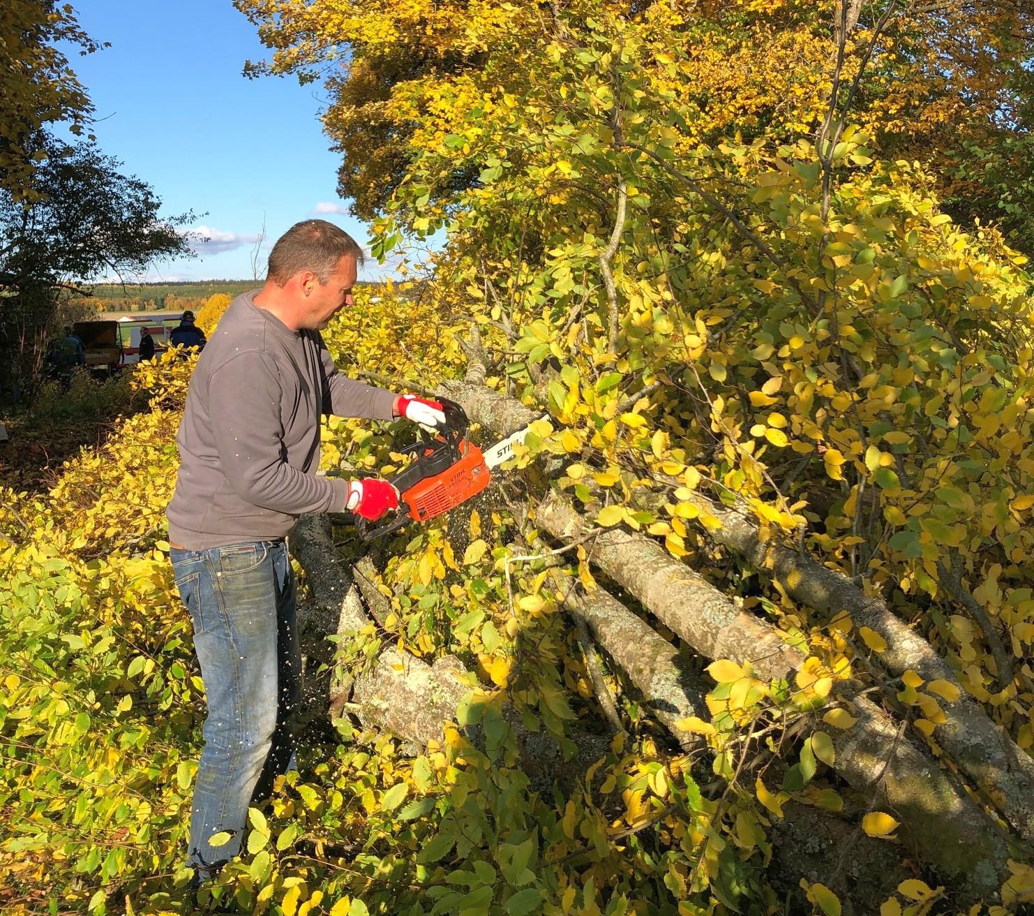 Tim zerlegt den Baum in handliche Teile