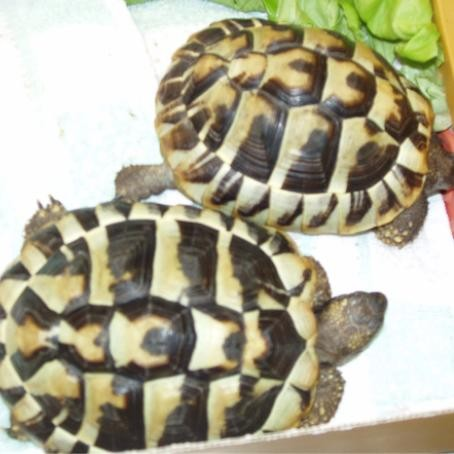 Schildkröten bei Tante Doktor