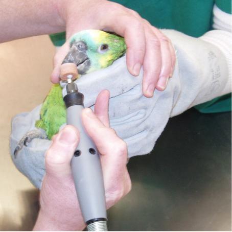 Dr. Roth macht Schnabelpflege