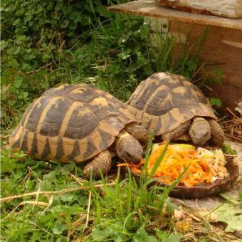 Schildkröten gut betreut