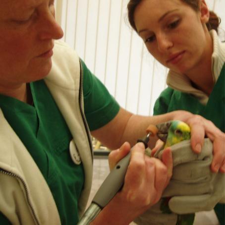 Schnabelpflege bei Dr. Roth